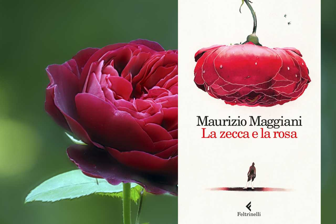 La zecca e la rosa